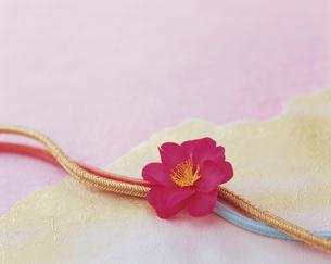 山茶花と帯締めの写真素材 [FYI04028451]