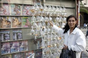 小魚を売るキヨスクの写真素材 [FYI04028636]