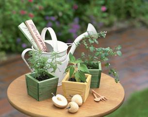 3つのハーブの鉢植の写真素材 [FYI04029148]
