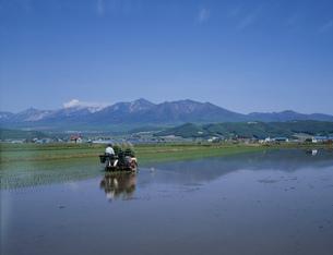 田植え風景と十勝岳の写真素材 [FYI04029452]