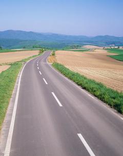 丘の道の写真素材 [FYI04029490]