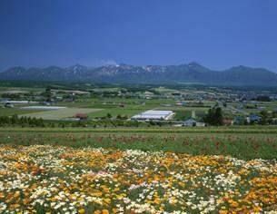 十勝岳連峰とフラワーランドの写真素材 [FYI04029495]