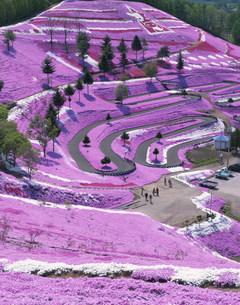 芝桜公園の写真素材 [FYI04029501]