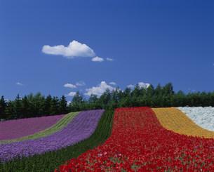 ファーム富田の虹の丘の写真素材 [FYI04029728]