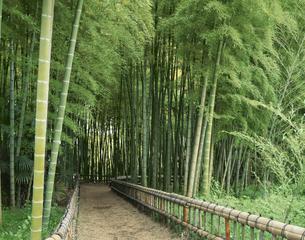 竹林公園竹の小径 東京都の写真素材 [FYI04030381]
