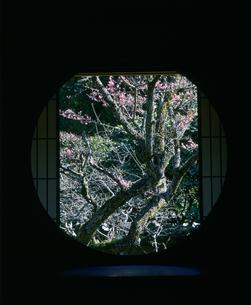紅梅と丸窓 雲龍院の写真素材 [FYI04030489]