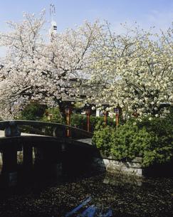 八重桜と神龍池 六孫王神社の写真素材 [FYI04030518]