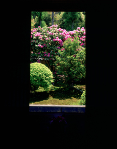石楠花と格子窓 雲龍院 泉涌寺の写真素材 [FYI04030566]