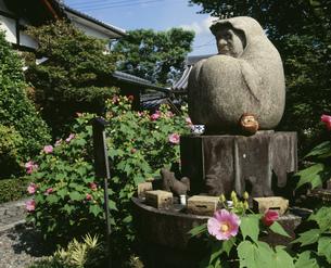 法輪寺(だるま寺)の芙蓉の写真素材 [FYI04030664]