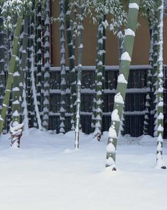 常照寺 雪の竹林の写真素材 [FYI04030732]