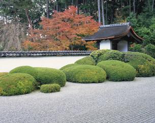 正伝寺庭園の紅葉の写真素材 [FYI04030739]