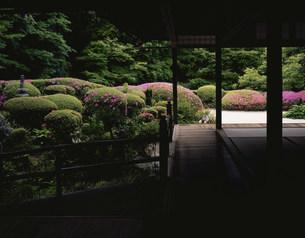 庭園(枯山水) 皐月 詩仙堂の写真素材 [FYI04030830]