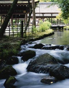 上賀茂神社楢の小川と新緑の写真素材 [FYI04030841]