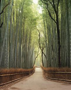 竹の小径の写真素材 [FYI04032328]