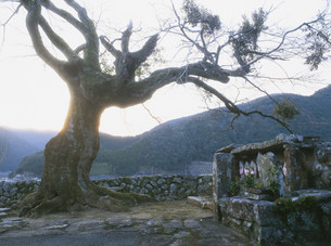 禅燈寺の写真素材 [FYI04032511]