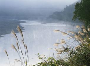 熊野地方の鮎漁ワナの写真素材 [FYI04032657]