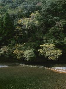 熊野地方の鮎漁ワナの写真素材 [FYI04032661]