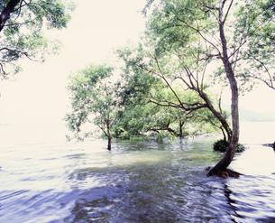 琵琶湖の湖岸の写真素材 [FYI04032941]
