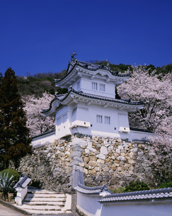 龍野城跡の桜の写真素材 [FYI04033009]