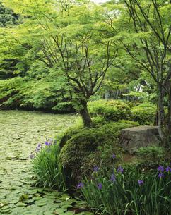 鯉沢の池 大原野神社の写真素材 [FYI04033077]