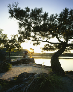 広沢池の朝の写真素材 [FYI04033078]