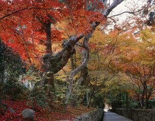 琴坂の秋 興聖寺の写真素材 [FYI04033087]