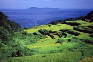 夏の棚田と馬渡島遠景の写真素材 [FYI04033178]