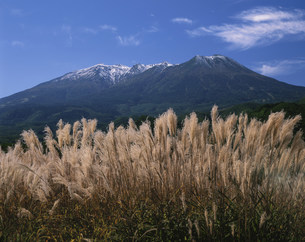 ススキと御嶽山 開田高原の写真素材 [FYI04033325]