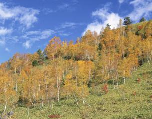 秋の志賀高原 熊の湯の写真素材 [FYI04033330]