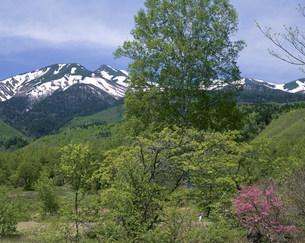 一の瀬園地からの乗鞍岳 乗鞍高原の写真素材 [FYI04033436]