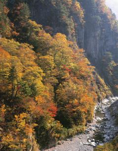 白山スーパー林道の紅葉の写真素材 [FYI04033476]
