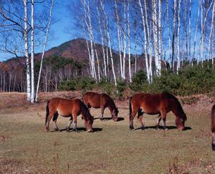 木曽馬の里の写真素材 [FYI04033860]