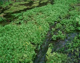 姫川源流の水源の写真素材 [FYI04033868]