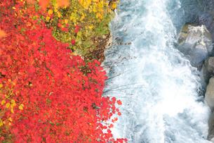 美瑛川と紅葉の写真素材 [FYI04033874]
