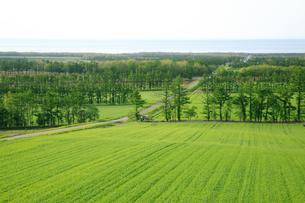 畑とオホーツク海の写真素材 [FYI04033893]