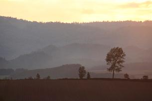 夕暮れの畑の写真素材 [FYI04033901]