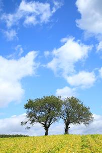 さくらんぼの木と秋空の写真素材 [FYI04033910]