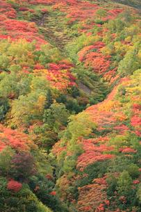 赤岳銀泉台の紅葉の写真素材 [FYI04033915]