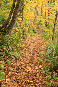 紅葉した林道の写真素材 [FYI04033917]