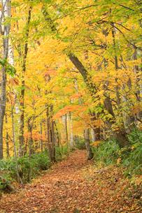 紅葉した林道の写真素材 [FYI04033918]