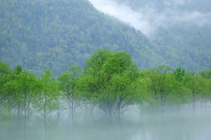 岩尾内湖の新緑の写真素材 [FYI04033920]