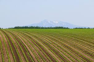小清水町の畑より望む斜里岳の写真素材 [FYI04033922]