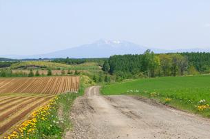 小清水町の畑より望む斜里岳の写真素材 [FYI04033925]