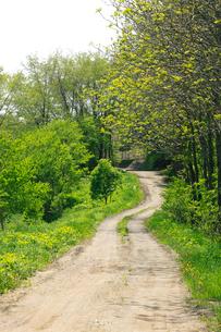 新緑の農道の写真素材 [FYI04033927]