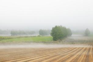 朝霧の畑の写真素材 [FYI04033929]