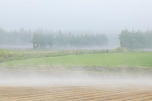 朝霧の畑の写真素材 [FYI04033930]