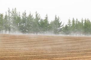 朝霧の畑の写真素材 [FYI04033933]