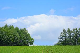 畑と青空の写真素材 [FYI04033941]