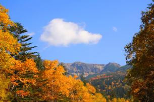 十勝岳連峰の紅葉の写真素材 [FYI04033945]