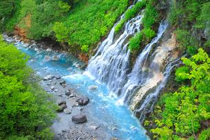新緑の白髭の滝の写真素材 [FYI04033996]